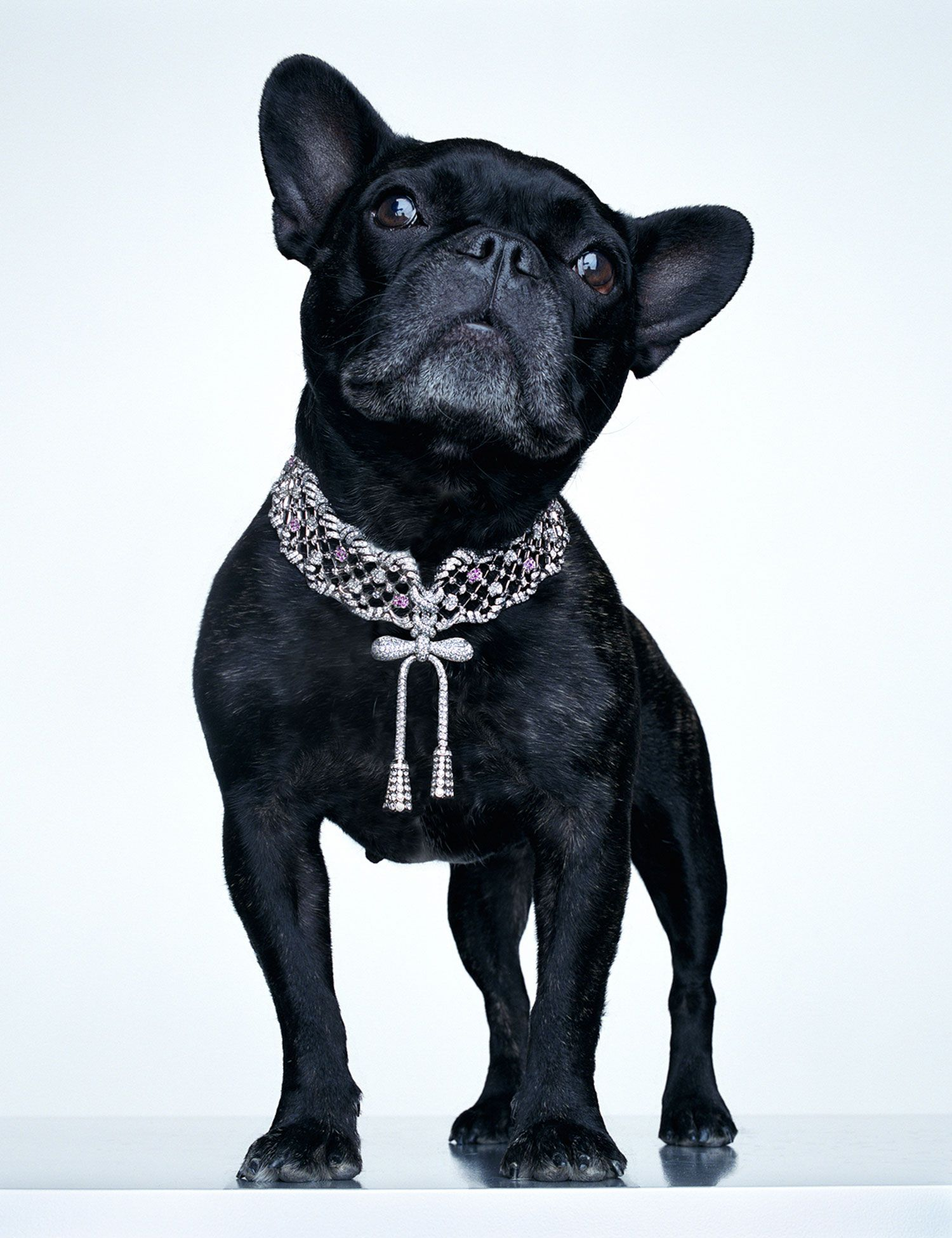 torkil gudnason animal jewelry french bulldog