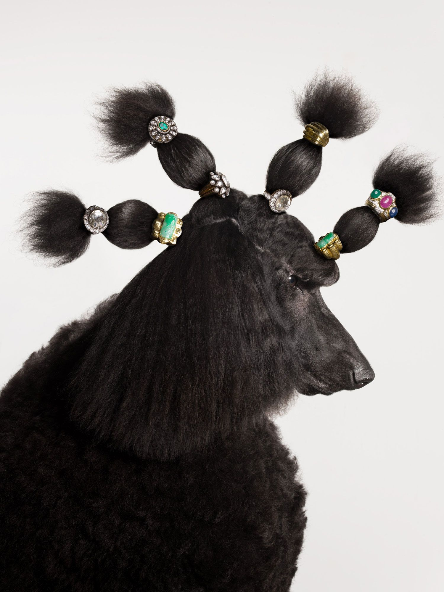 torkil gudnason animal jewelry poodle