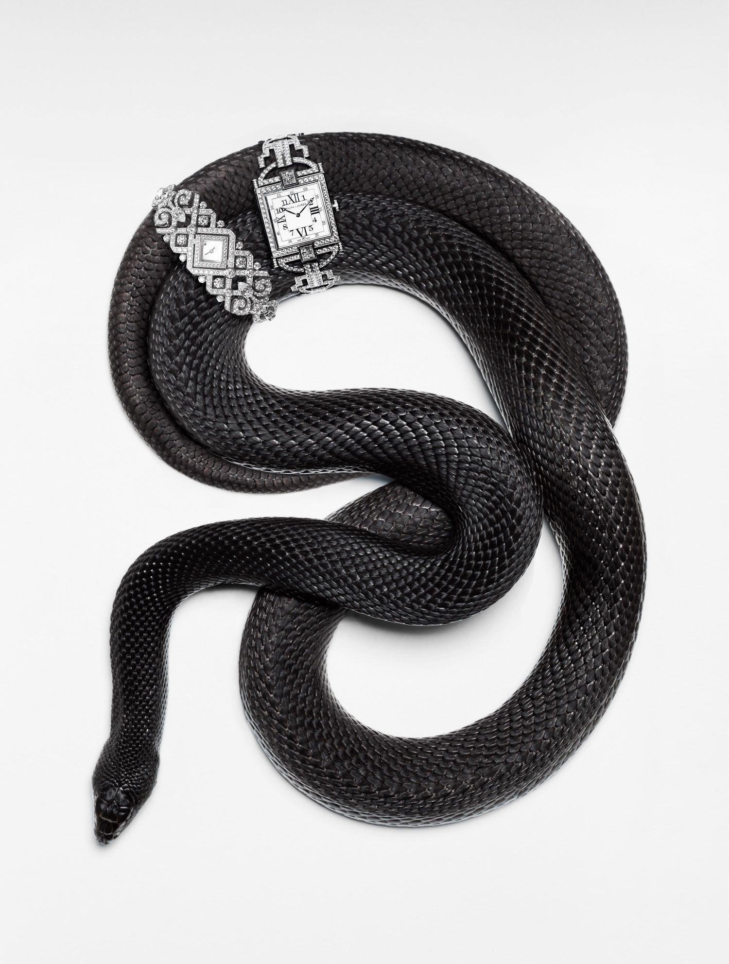 torkil gudnason animal snake watches