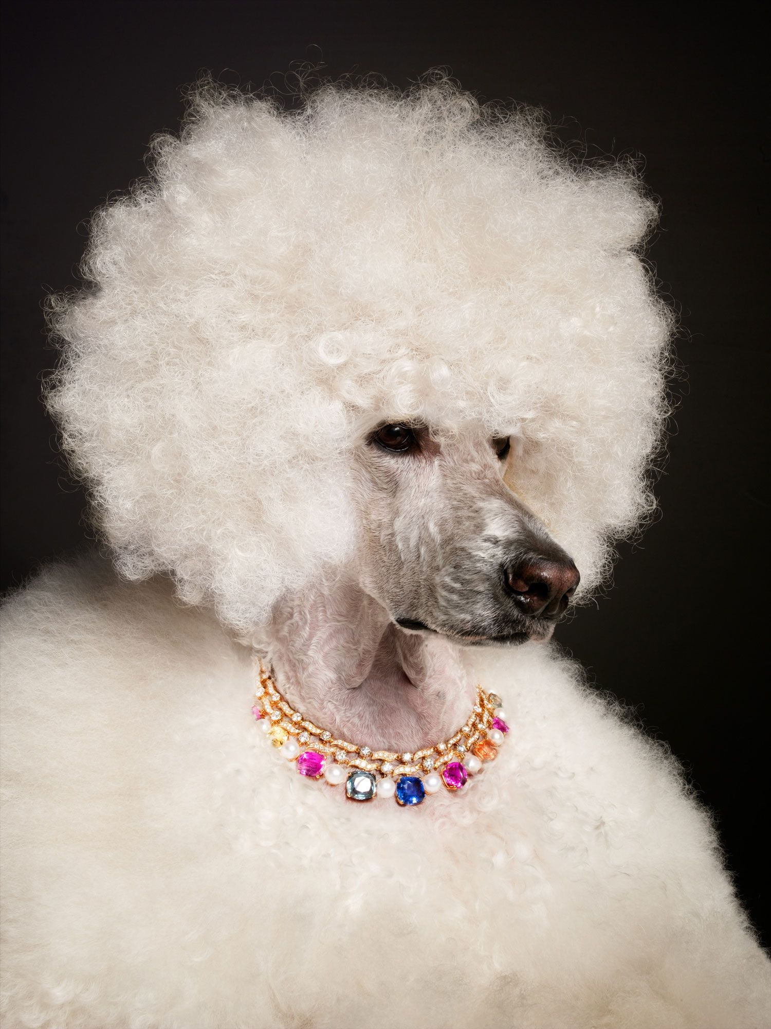 torkil gudnason jewelry animals poodle