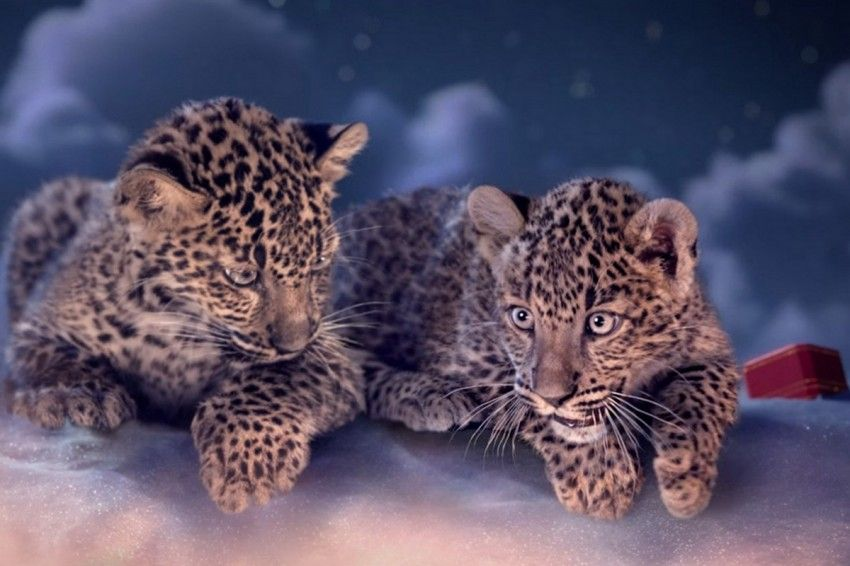 More Cartier? More cute panthers? here it is:
